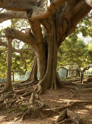 botanische tuin in Kandy